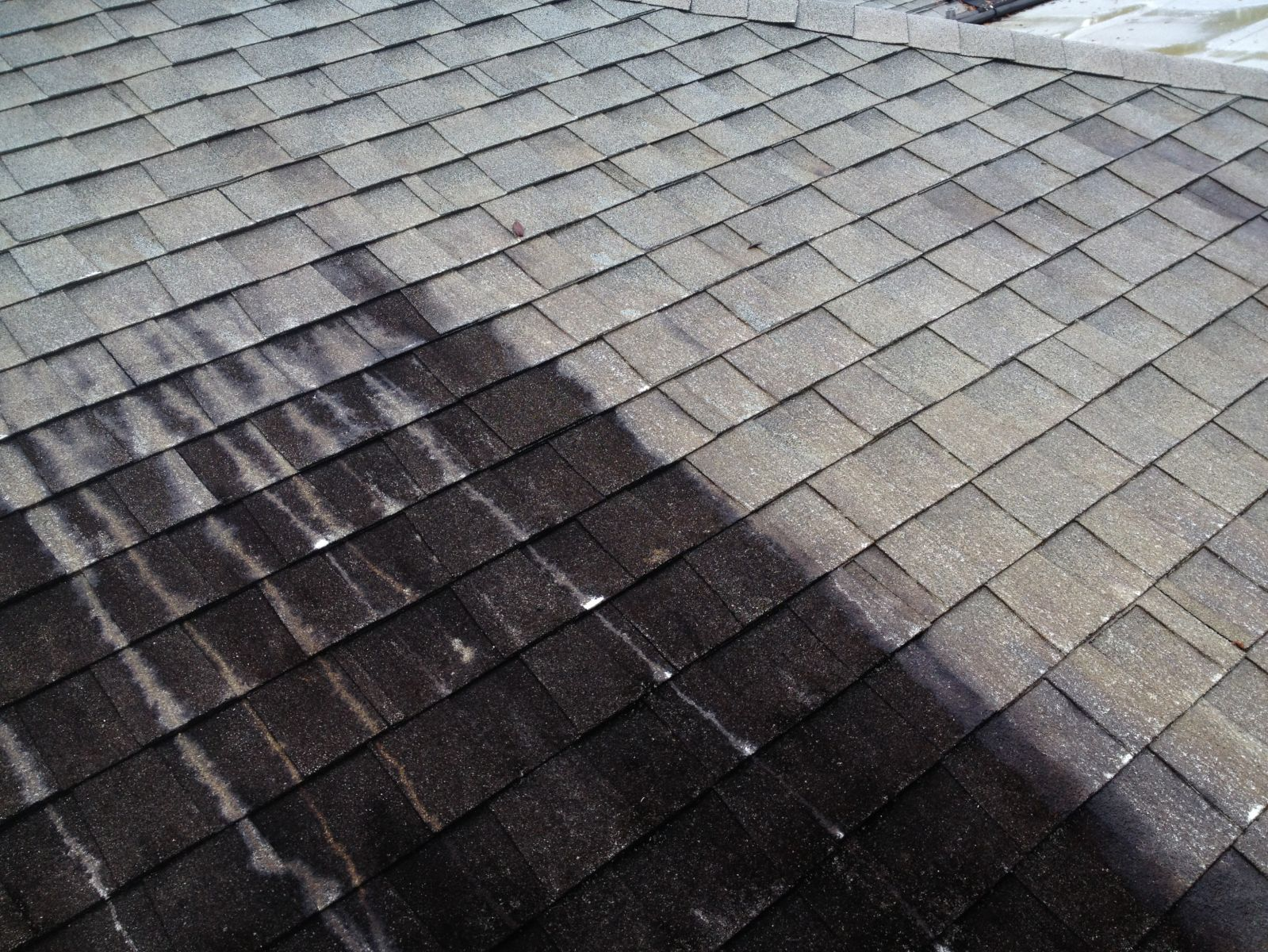Roof cleaning solution in action